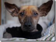 Nico Bordhund
